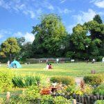 不眠症の改善策は土日に公園でゴロゴロすると効果的